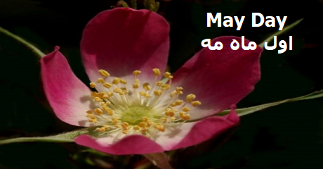 may-day.png