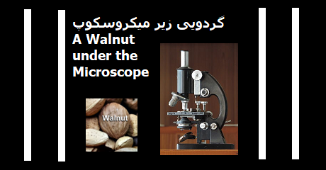 walnut-book